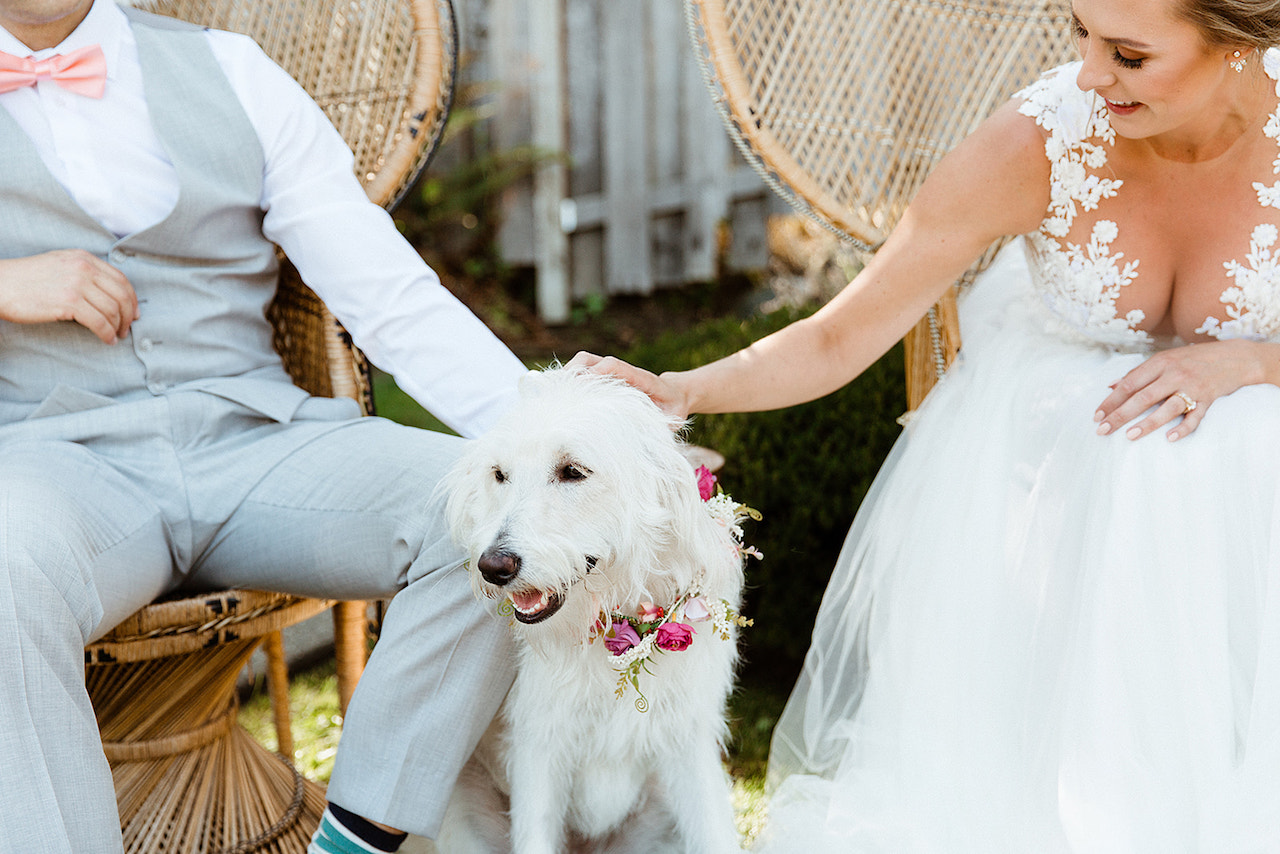 dog at wedding floral crown
